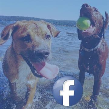 facebook-F-dogs