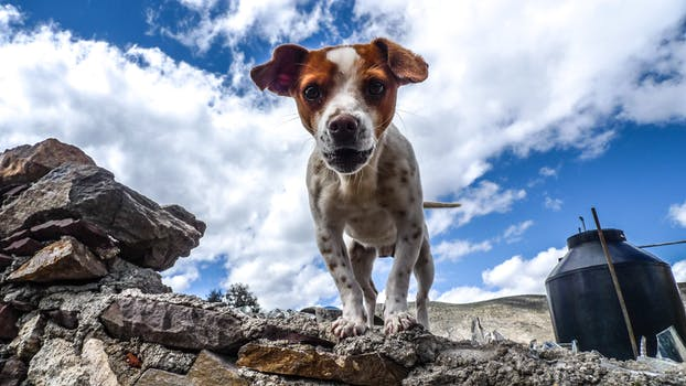 Support great behavior in your dog with quality food