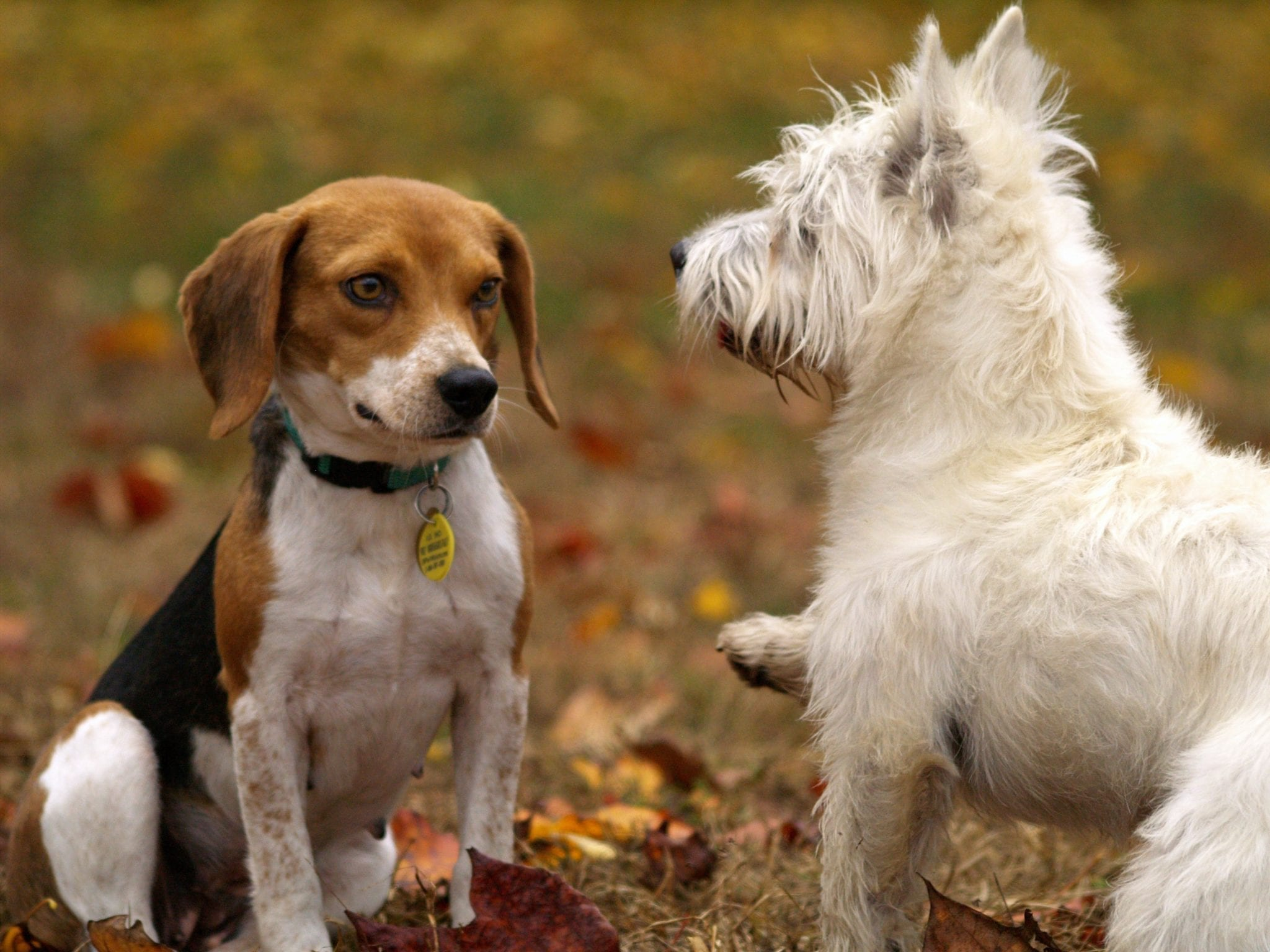 Puppy play groups teach dogs manners and self control