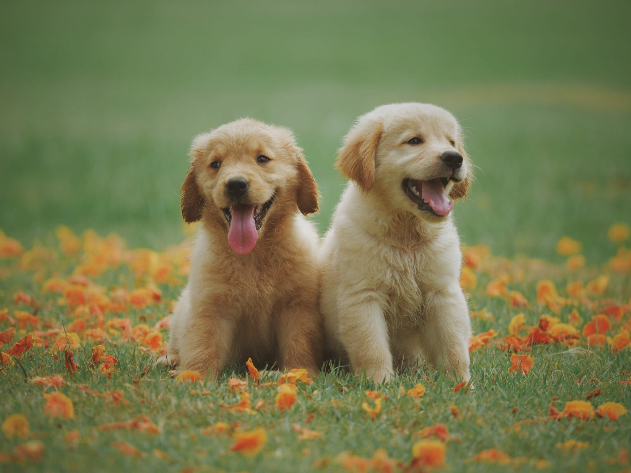 Puppy play groups provide mental & physical exercise