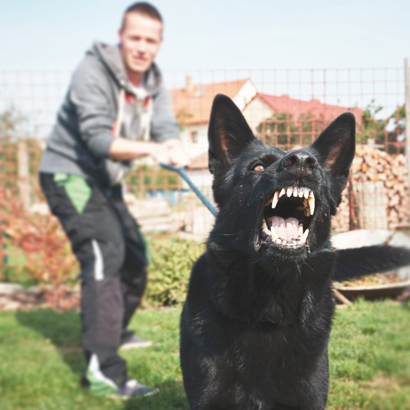 Aggressive dogs can change will behavior modification