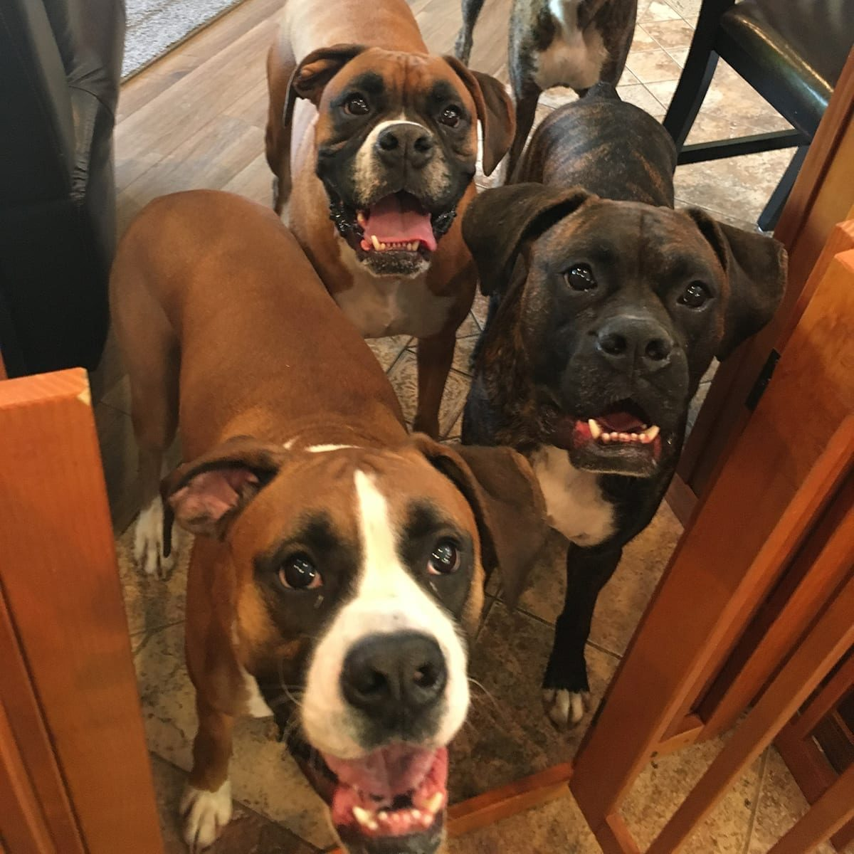 Puppy training: Well socialized dogs are a joy around the house